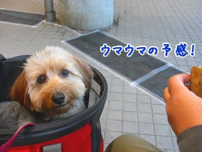 俺とお前と、大治郎